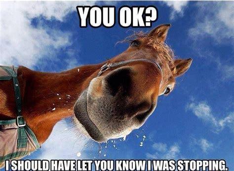 Horse Riding Meme - funny horse racing memes racehorse meds racehorse meds