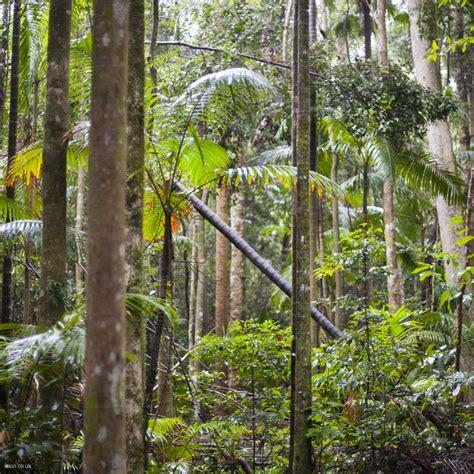blue planet biomes tropical rainforest autos post