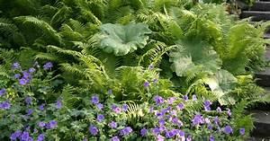 Farn Im Garten : blattschmuckpflanzen faszinierende farne mein sch ner garten ~ Orissabook.com Haus und Dekorationen