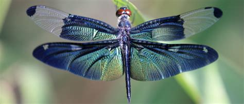 nanotech modeled  dragonfly wings fights surgical