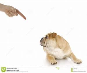Bad Puppy Royalty Free Stock Photo - Image: 16881825