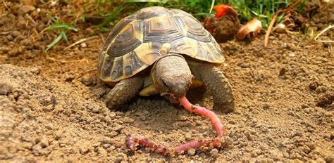 anita la tortue au granny square crochet global hyper