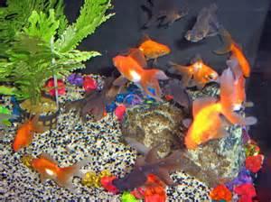 poisson aquarium eau de mer froide images
