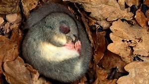 Halten Maulwürfe Winterschlaf : warum halten manche tiere einen winterschlaf wissen ~ Lizthompson.info Haus und Dekorationen