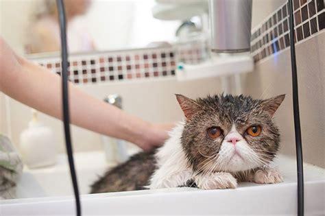 Should you bathe cats