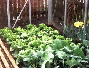 Gewächshaus Bepflanzen Plan : gew chshaus f r gem se anbau von tomaten gurken paprika ~ Lizthompson.info Haus und Dekorationen