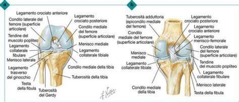 tavole netter manuale riabilitazione paziente protesizzato di anca