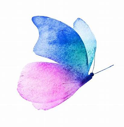 Butterfly Painting Watercolor Aesthetic Technique Abstract Beginner