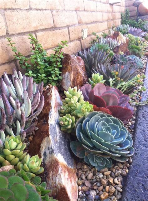 How to Grow Cacti and Succulents - Palmers Garden Centre