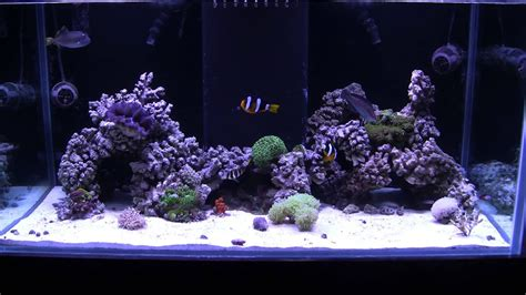 Saltwater Aquascaping by Update New Aquascape Of The 120 Reef
