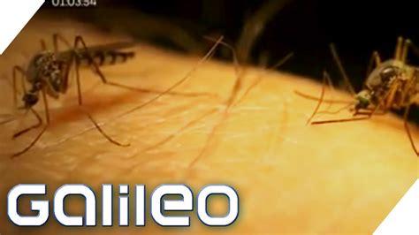 faszinierend  hilft gegen muecken im zimmer tun