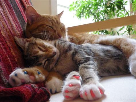declawing cats cat declawing alternatives related keywords cat declawing alternatives long tail keywords