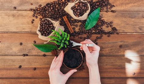 Use coffee grounds to add nutrients to your soil.9 x expert source ben barkan garden & landscape designer expert interview. 7 Fun Facts About Using Coffee Grounds in the Garden ...
