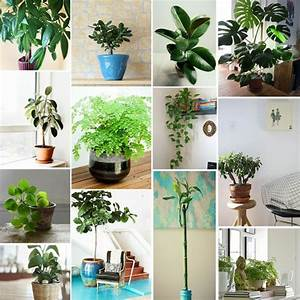 Pflanzen Wohnzimmer Feng Shui : feng shui regeln tipps f r die gestaltung einer feng shui wohnung ~ Bigdaddyawards.com Haus und Dekorationen