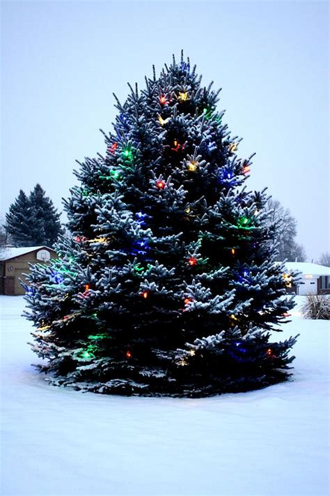 outdoor christmas tree decorated photograph by unknown