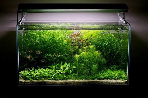 aquascape lighting aquascaping planted aquarium techniques