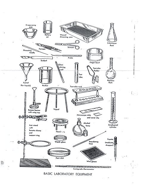 20 lovely science lab tools worksheet images wdscreative us