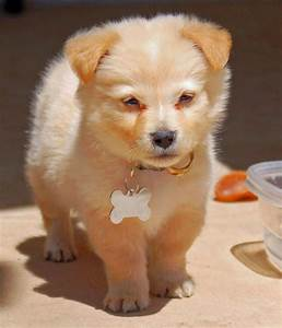 Cute Mixed Dog Breeds Cutest Breed - Litle Pups
