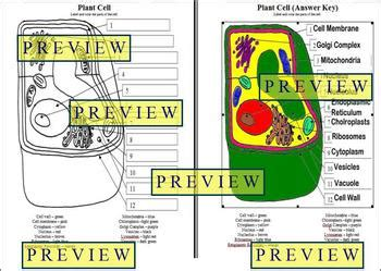 plant cell coloring key cells 1 plant cell coloring worksheet with questions