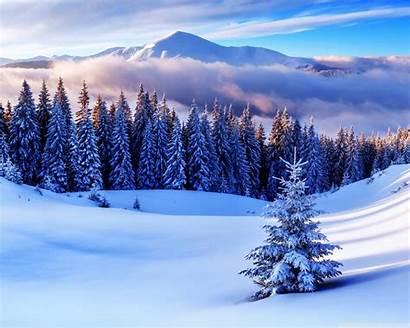 Winter Season Desktop Wallpapers Forest 4k Mountains