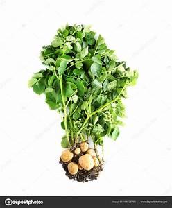 Pflanze Mit S : pflanze mit a pflanze mit c f r stadt land fluss fleischfressende pflanze sonnentau 1 pflanze ~ Orissabook.com Haus und Dekorationen
