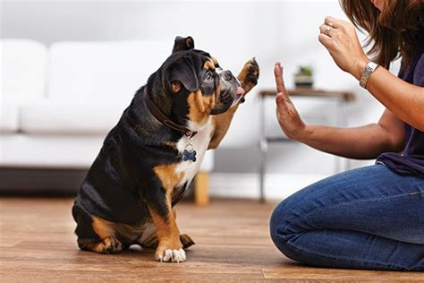 techniques      dog training friends