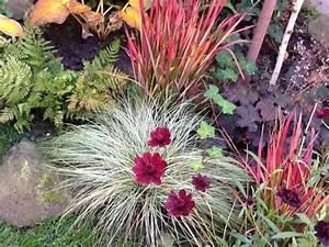 Rotes Gras Winterhart : japanisches blutgras winterhart pflanzen f r nassen boden ~ Michelbontemps.com Haus und Dekorationen