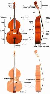52 Best Cello Anatomy Images On Pinterest