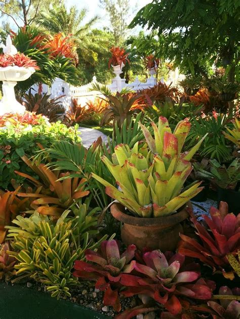 283 Best Bromeliads Images On Pinterest  Tropical Gardens