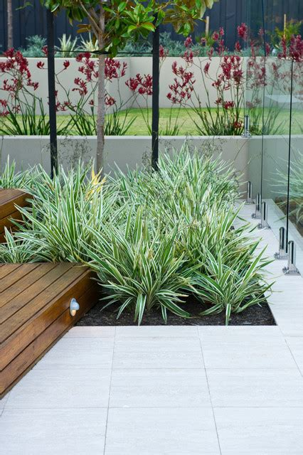 modern outdoor plants dalkeith garden contemporary landscape other metro by cultivart landscape design