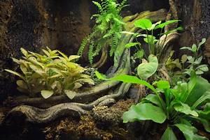 Pflanzen Für Terrarium : erfahren sie hier alles zum thema terrarium wie pflanzen tiere uvm ~ Orissabook.com Haus und Dekorationen