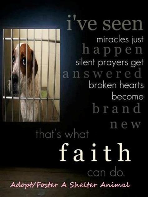 images  fostering animals  pinterest