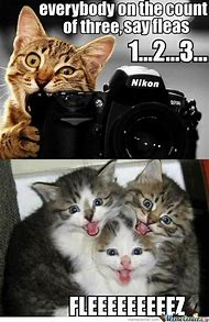 Best Cute Cat Memes Ideas And Images On Bing Find What Youll Love
