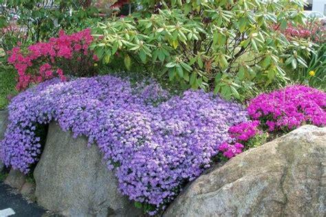 Garten Gestalten Bodendecker by Phlox Pflanzen Idee F 252 R Den Steingarten Garten
