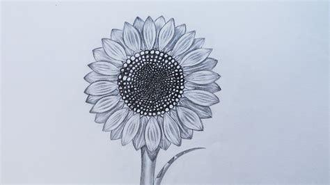 sketch  sunflower youtube