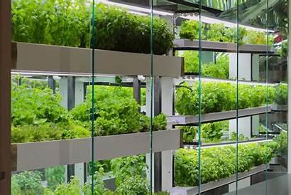 Wall Hydroponic Farmhouse Hydroponics Project System Gardenista