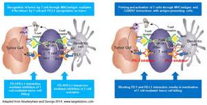 'Inhibit the inhibitor' - it's all about PD-(L)1 ...