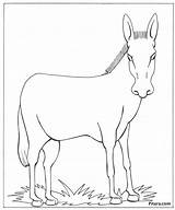 Donkey Animals Domestic Coloring Pages Drawing Pet Animal Warming Global Colouring Pitara Shrek Getdrawings Outlines Craft Paintingvalley Tail sketch template