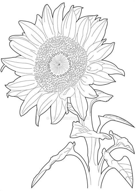 sunflower drawings  ai