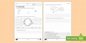 Ks3 The Human Eye Homework Worksheet    Worksheet