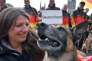 Was Sind Die Besten Bratpfannen : deutschlands belgische sch ferhunde sind die besten ~ Markanthonyermac.com Haus und Dekorationen