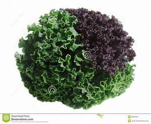 Fresh Curly Kale Leaves Stock Photo - Image: 6981640