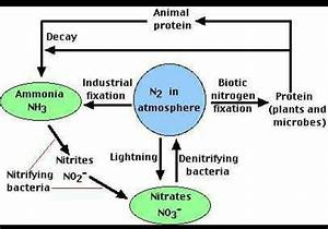 Explain Schematic Ray Diagram Of Nitrogen Cycle