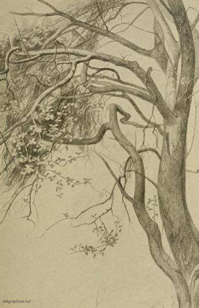 boughs   crab apple tree drawing  doodles