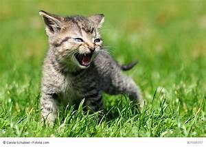 Was Brauchen Katzen : ern hrung f r katzen auf die richtige art und in jedem alter ~ Lizthompson.info Haus und Dekorationen
