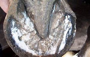 A Comprehensive Guide On Horse Hoof  Care And Management