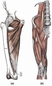 Fixator Anatomy Definition