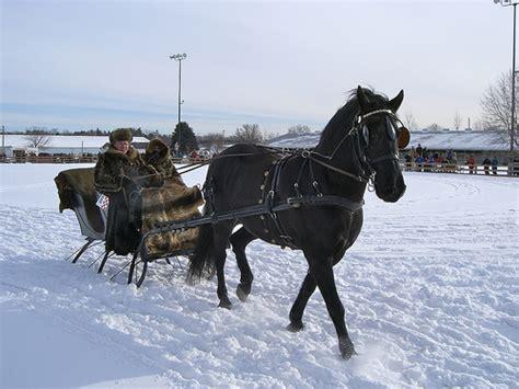sleigh harness file struts stuff jpg wikimedia commons