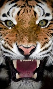 Roar by Alain Turgeon | Animals wild, Wild cats, Animals ...