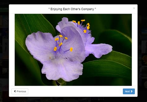 Bootstrap Gallery 9 Free Bootstrap Gallery Templates Designerslib